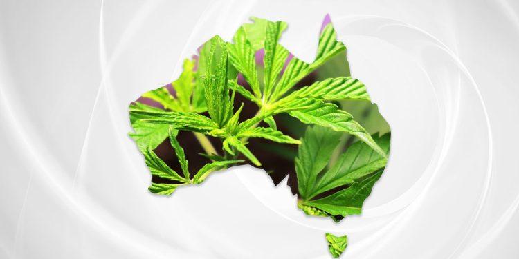 Australia map with cannabis