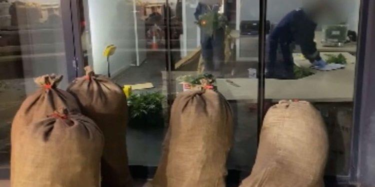 Bags of cannabis seized in Australia